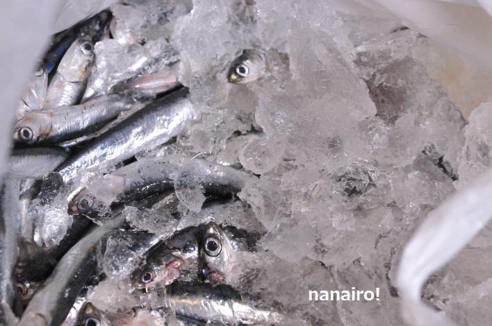 魚醤の材料、カタクチイワシ。