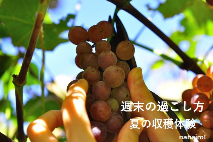 夏の収穫体験